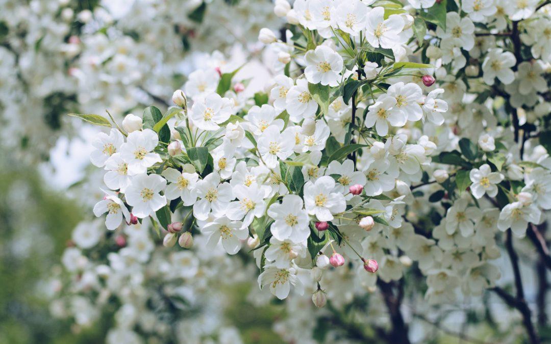 Białe kwiaty w perfumach